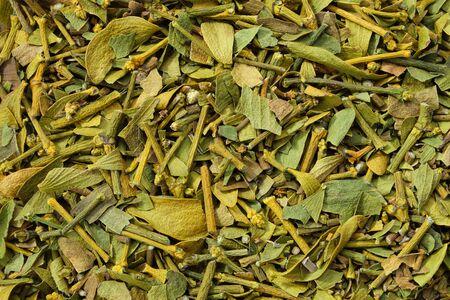 Healthy mistletoe. Background of dry Viscum album plants. Top view. Herbal medicine.