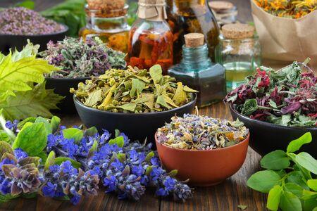 Bowls of dry medicinal herbs - mistletoe, wild marjoram, heather. Calendula flowers, bilberry twigs and bugleherb flowers. Healing herbs assortment and infusion bottles. Alternative medicine.