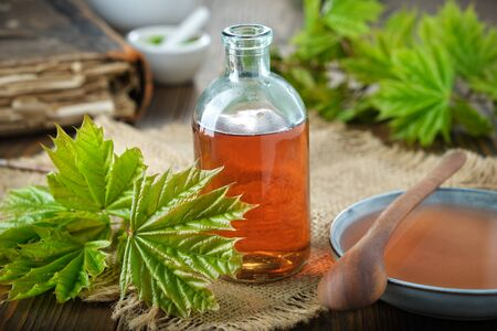 Bottle of maple syrup or healthy tincture, saucer of syrup and fresh green maple leaves on table.