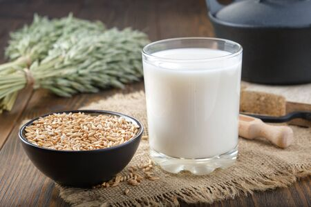 Glass of oats milk, ingredients for making oats milk or oatmeal beverage at home. Green oat ears and black pan on background.
