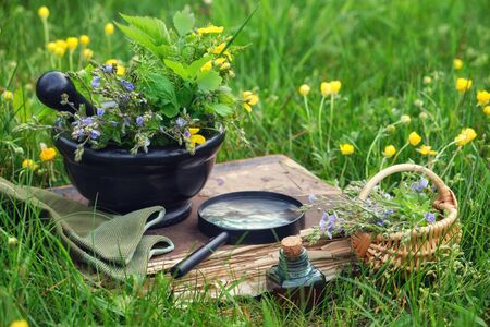 Mortar of medicinal herbs, old book, infusion bottle, basket and magnifying glass on a grass on meadow outdoors.  Фото со стока