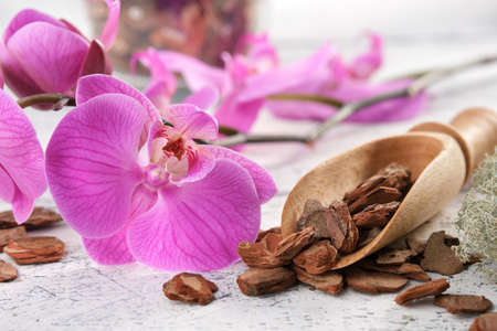 Beautiful purple orchid flower and wooden scoop of pine bark.