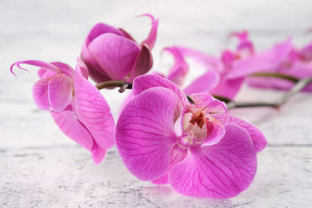 Beautiful purple orchid close up on white wooden board. Фото со стока