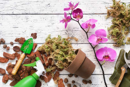 Flowerpot, pine bark, expanded clay, moss and shovel for planting orchids in a pot.