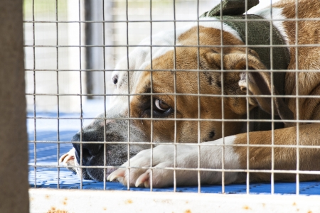 sad dog: Lonely dog was locked in cage