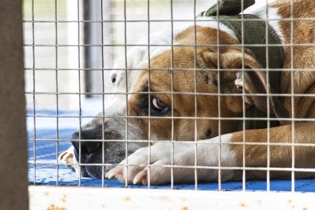 mirada triste: Perro solo fue encerrado en la jaula Foto de archivo