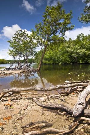 mangroves: Mangroves and blue sky