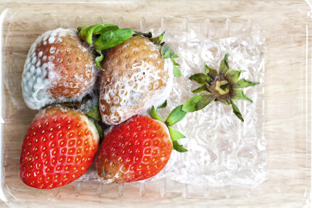 uneatable: Strawberry with fungi in  plastic box on Chopping wood