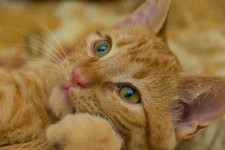 Thoughtful cat