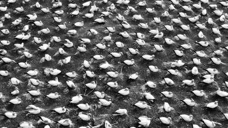 colony: Bird colony