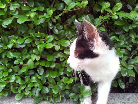 appeared: Kitten appeared from the bushes