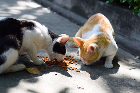 stray: close up white homeless cat eating on street (background) Stock Photo