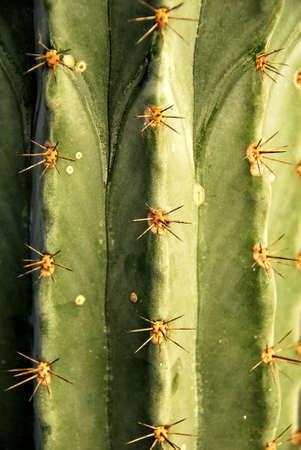 Danger Cactus photo