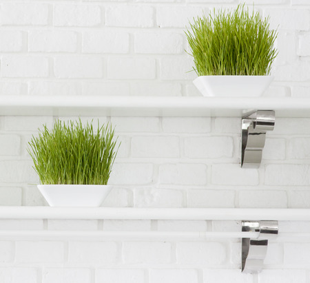 Green grass plant decorating photo