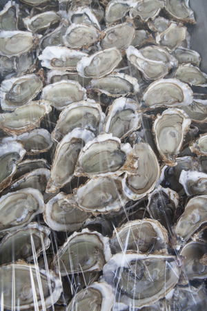 ostracean: Oysters Stock Photo