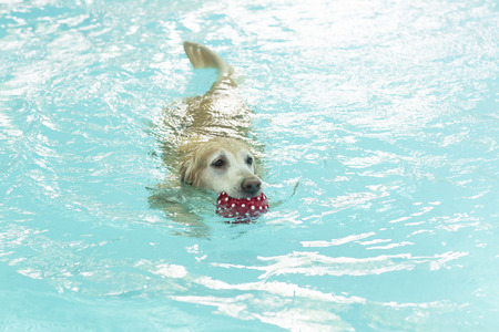 dog swimming in clear blue waters photo