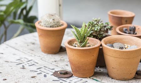 cactus botany: cactus decor