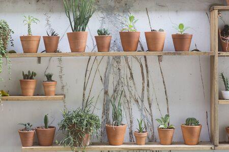 decor: cactus decor