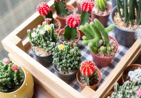 Cactus Banco de Imagens