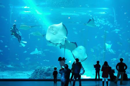 seafan: underwater world Editorial