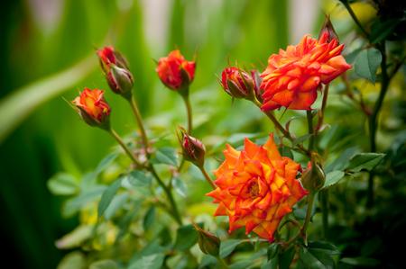 wildflowers: wildflowers Stock Photo
