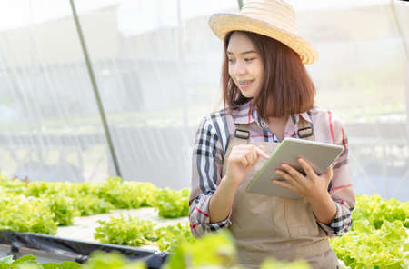 Beautiful young woman farmer researching hydroponics, organic vegetables with tablet technology system in greenhouse working owner small business entrepreneur, Healthy food nutrition product  Stockfoto