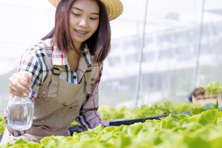 Beautiful young woman farmer water spraying hydroponic, organic vegetables care in greenhouse owner small business entrepreneur, Healthy food nutrition product, Happy people lifestyle farming