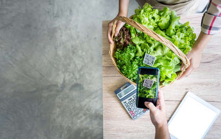 QR Code scanner buying hydroponics vegetables on basket in market greenhouse, Organic farmer working technology with Smartphone payment and shopping digital cashless society, Online farmers business 스톡 콘텐츠
