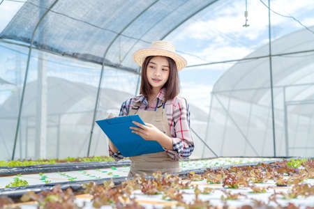 Beautiful young woman farmer researching hydroponics, organic vegetables in greenhouse working owner small business entrepreneur, Healthy food nutrition product  스톡 콘텐츠