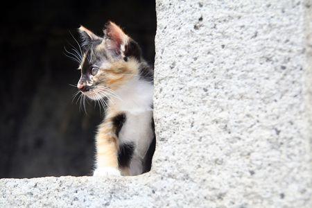 Kätzchen auf dem Stein Fenster Standard-Bild - 6715950
