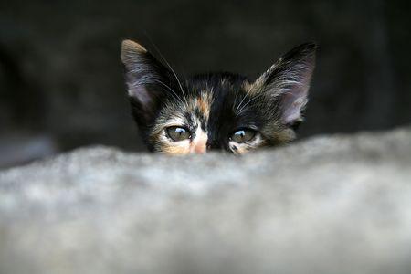 Kitten Hidding hinter Steinmauer Standard-Bild - 6715887
