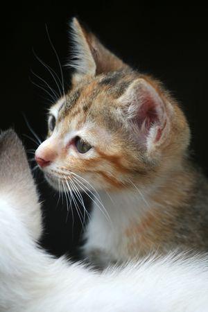 Lovely Katze zu sehen, etwas außerhalb Standard-Bild - 6715867