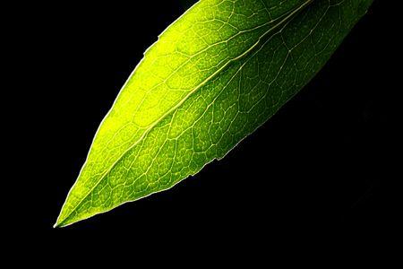 Baum Blätter auf schwarzem Hintergrund  Standard-Bild - 6715941