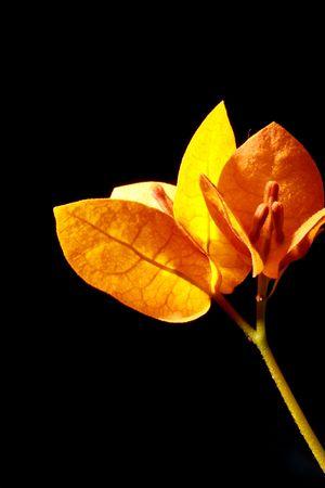Gelbe Blumen auf dem schwarzen Hintergrund  Standard-Bild - 6715939