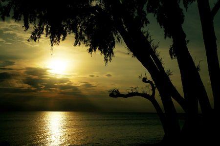 Ansicht der Bäume schwarzen Konturen am Strand bei Sonnenuntergang  Standard-Bild - 6716053