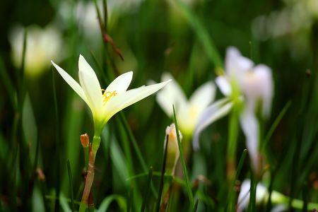 Weiße Blume und grün Leaf close up Standard-Bild - 6715833
