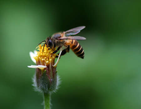 Bee and a Flower photo