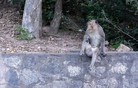 monkey sitting on a stone wall with   mound of soil and tree Banco de Imagens