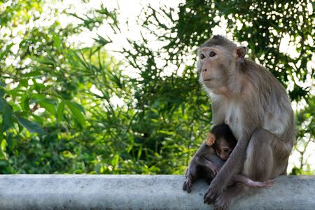 Cute monkey. Monkey mother with baby love sitting on a steel