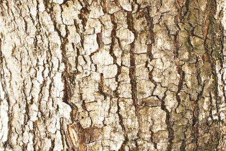 tamarindo: Textura de tamarindo Foto de archivo
