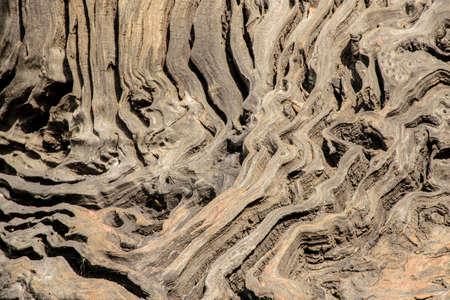 distorted image: Bark Tree wood