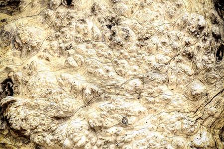 distorted image: Bark Tree wood texture