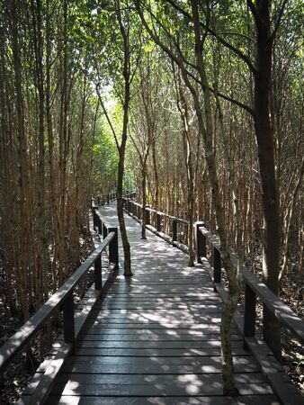 Boardwalk In Mangrove Forest At Pranburi National Forest Park, Prachuap Kriri Khan, Thailand