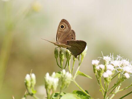 breeding: Butterflies are breeding