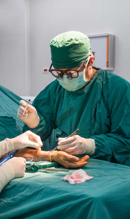 Surgeon operating arteriovesurgeon operating arteriovenous fistula for long term dialysis for end stage renal disease patient photo