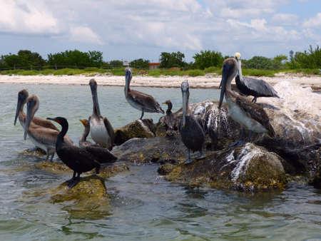 Pelicans sitting a rocks in water