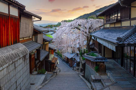 Beautiful cherry blossom in old town of Higashiyama district, Kyoto City, Japan