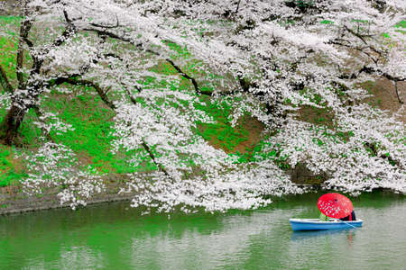Travelers enjoying the scenario surrounded by Chidori-ga-fuchi Moats cherry blossoms (sakura) on a rental boat ride