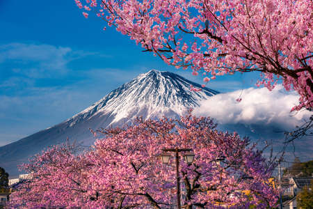 Mt Fuji and Cherry Blossom in Japan Spring Season