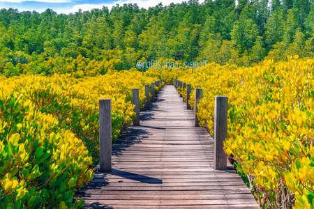 Wooden bridge at Tung Prong Thong or Golden Mangrove Field, Rayong province, Thailand ( Thai translation : Mangrove forest ecotourism Thung Prong Thong )